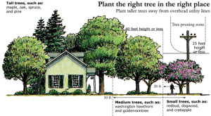 Trees near house illustration. Plant the right tree in the right place. Plant taller trees away from overhead utility lines. Tall trees such as: maple, oak, spruce, and pine. 40 feet height or less= Medium trees, such as: washington, hawthorne, and goldenraintree. 25 feet height or less,= small trees, such as: redbud, dogweed, and crabapple.
