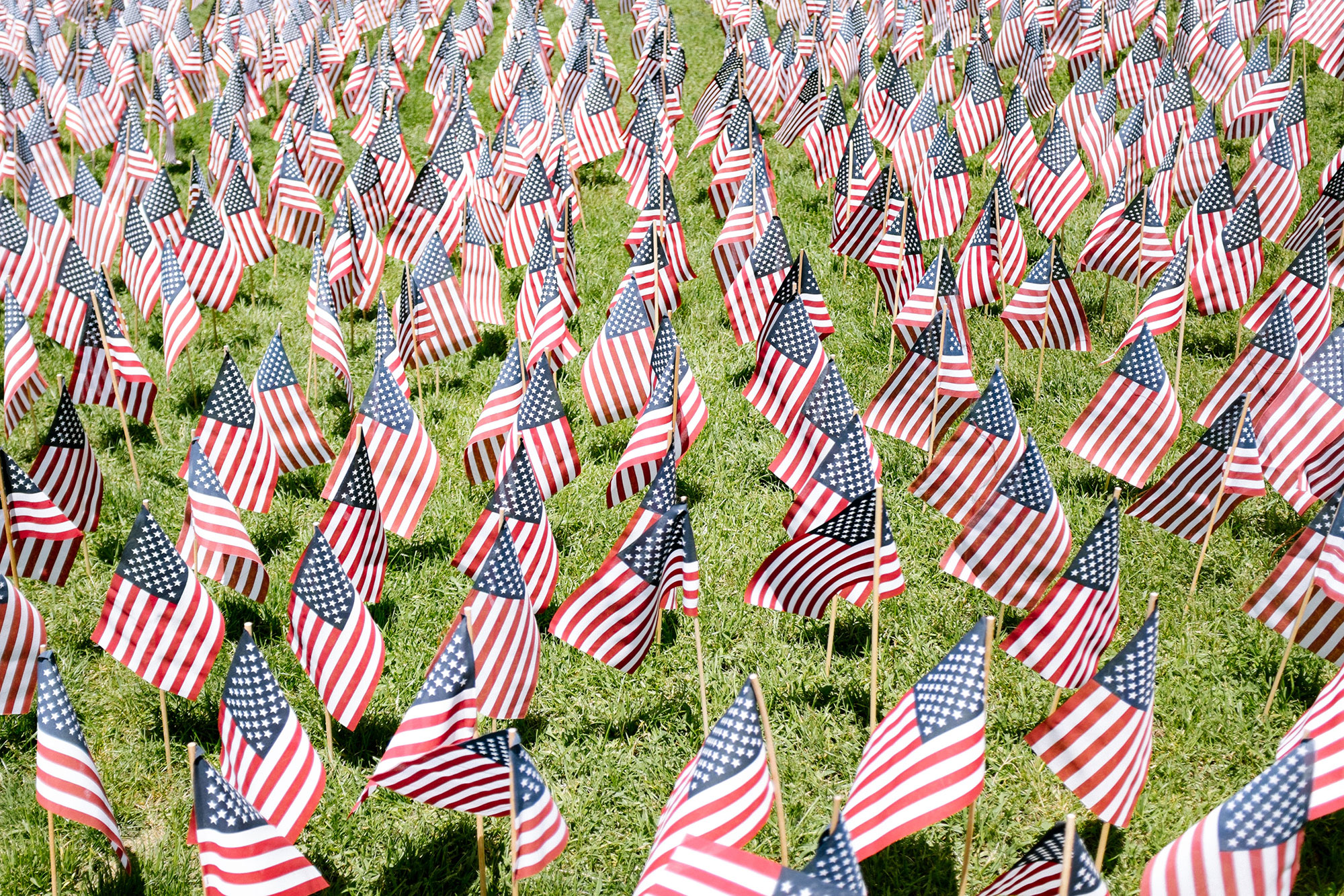 Grass covered in rows of small American flags.